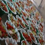 اردوی تابستانی کودکان خط چهار حصار کرج