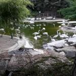 دختران مهرآفرین در باغ پرندگان
